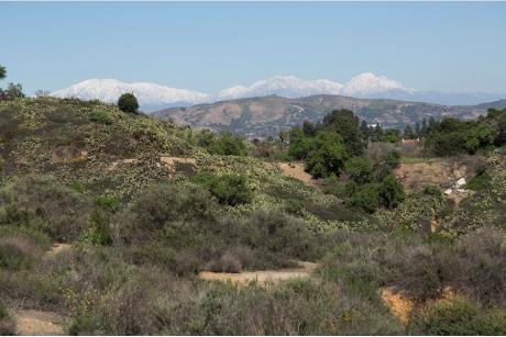 Coyote Hills Vista